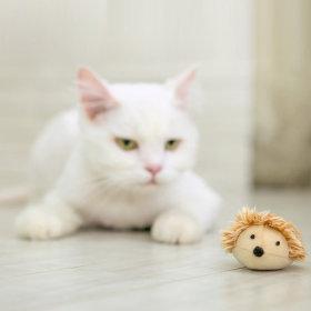 로얄펫 고양이 장난감 (브라운고슴이)