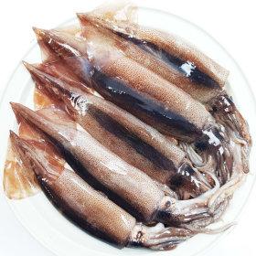 당일바리/산지직송 생물 오징어 1kg(3~6미)내외