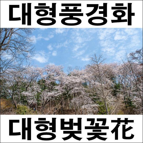 A685/풍경사진/풍경화/벚꽃사진/인테리어사진 상품이미지