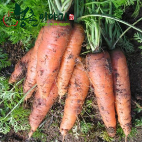Unwashed Carrots/10kg
