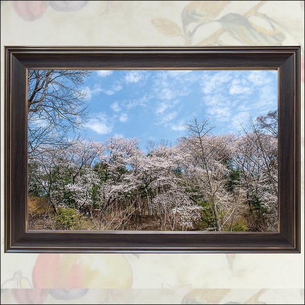 A685-0/풍경사진/족자/풍경화/벚꽃사진/대형사진 상품이미지