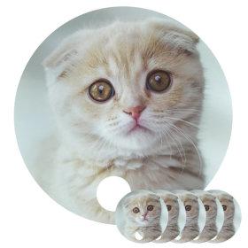 고양이 발바닥 양면 부채 5개 / 여름 용품 자외선차단