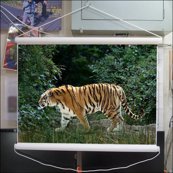 A305-0/호랑이/족자/호랑이그림/호랑이사진/풍경사진 상품이미지