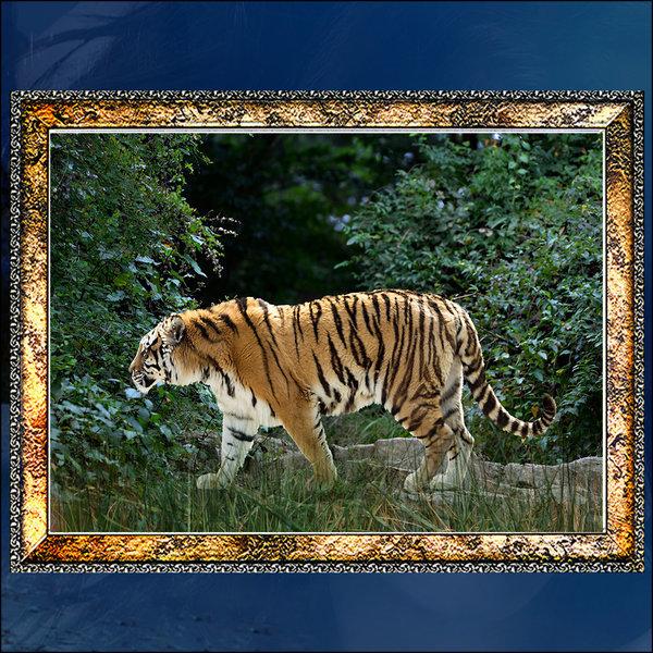 A305-3/호랑이/호랑이액자/호랑이그림/호랑이사진 상품이미지