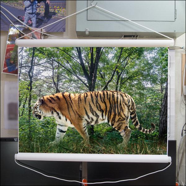 A283-0/호랑이/족자/호랑이그림/호랑이사진/풍경사진 상품이미지