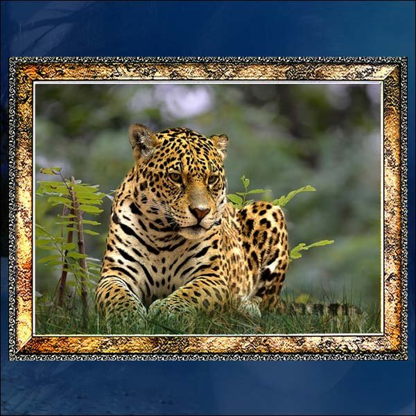 A272-3/표범액자/호랑이액자/호랑이그림/호랑이사진 상품이미지