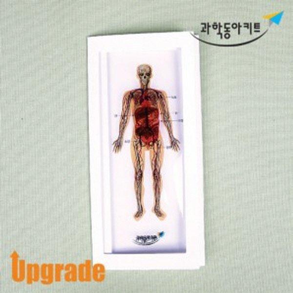딱과 인체 모형 만들기-소화기 순환기-(10명 세트) 상품이미지