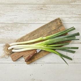 건강한 흙에서 자란 흙대파(단)