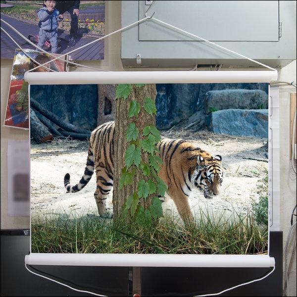 B282-0/호랑이/족자/호랑이그림/호랑이사진/풍경사진 상품이미지