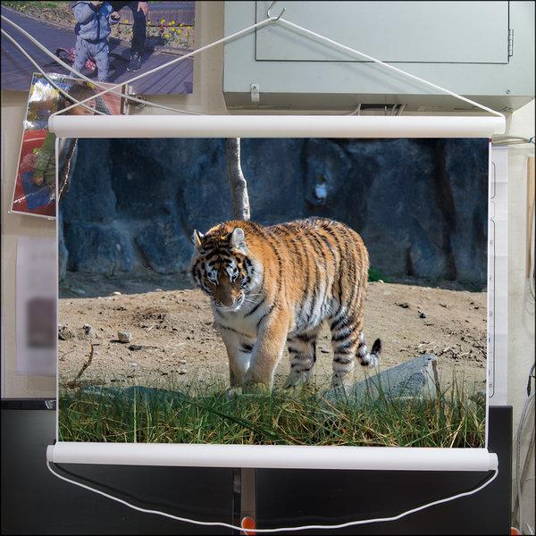 B367-0/호랑이/족자/호랑이그림/호랑이사진/풍경사진 상품이미지