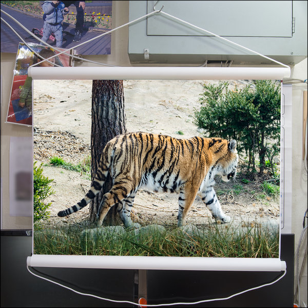 A263-0/호랑이/족자/호랑이그림/호랑이사진/풍경사진 상품이미지