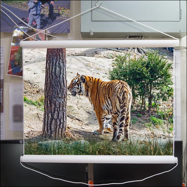 A018-0/호랑이/족자/호랑이그림/호랑이사진/풍경사진 상품이미지