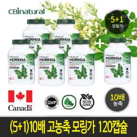(5+1)10배 고농축 모링가 120캡슐 캐나다 생산 직발송