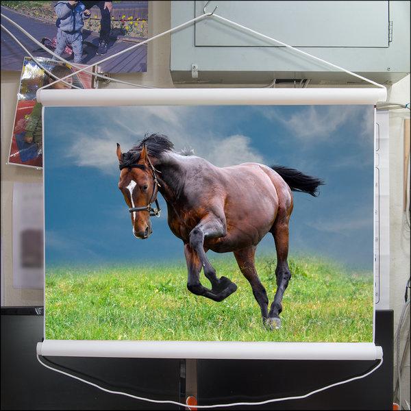 A012-0/말사진/족자/말그림/인테리어소품/풍경사진 상품이미지
