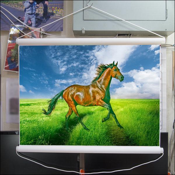 C458-0/말사진/족자/말그림/인테리어소품/풍경사진 상품이미지