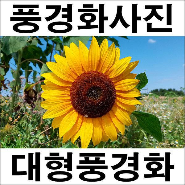 C044/인테리어소품/풍경사진/풍경화/해바라기사진 상품이미지