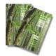 벌나무즙 벌나무진액 3배 더진한 프리미엄 50포 상품이미지