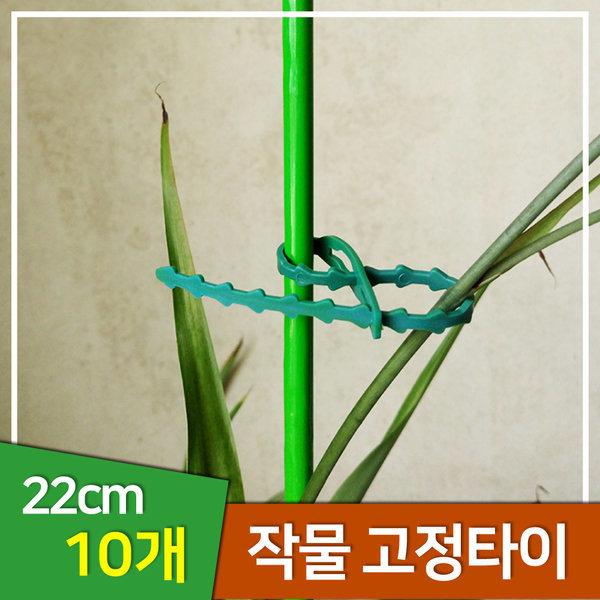 작물 고정타이(10개)/원예용품/식물가지 줄기 고정끈 상품이미지