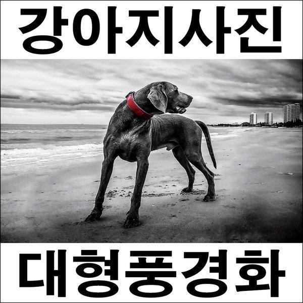 B156/인테리어소품/강아지사진/풍경화/벽장식/개사진 상품이미지