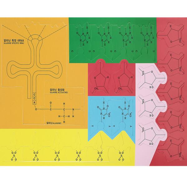 DNA부터 RNA  단백질합성 퍼즐 세트(A형) 상품이미지