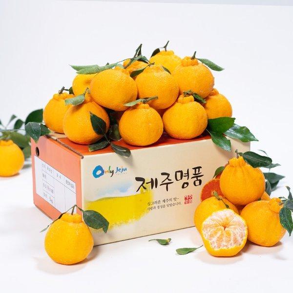 (자연맛남)  자연맛남  제주 한라봉 4.5kg 중소과(25과내외/벌크포장) 상품이미지