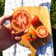 황종운 농부의 GAP 정읍 새빨간 완숙토마토 2.5kg 상품이미지