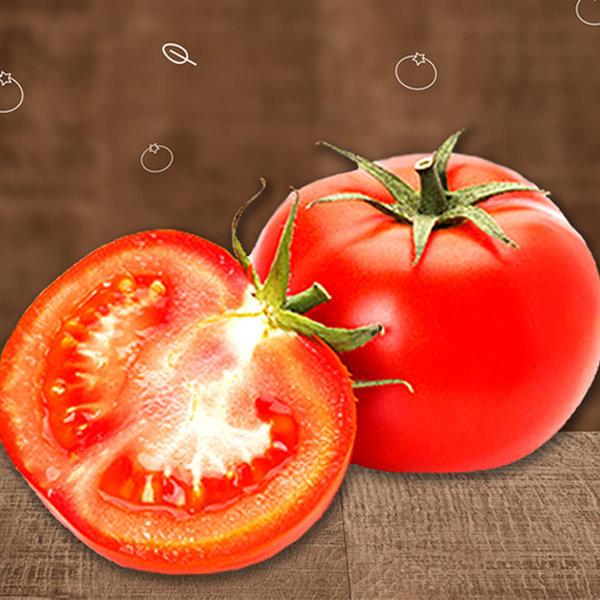야과몰 달콤단단 고당도 토마토 중대과 5kg 상품이미지