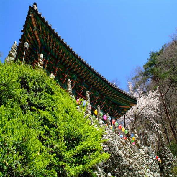 (봄꽃여행)KTX/마이산벚꽃/진안마이산/신비의탑사/전주한옥마을/벚꽃여행/당일여행/코레일기차여행 상품이미지