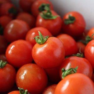 갤러리아 단단하고 싱싱한 대추방울토마토 3kg(4-5번과)