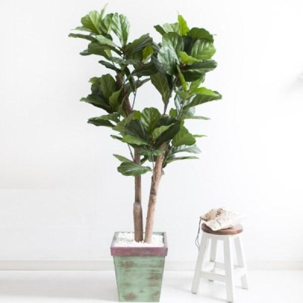 떡갈고무나무화분set 200cm K M 조화 인조 나무 인테리 (1689387) 상품이미지