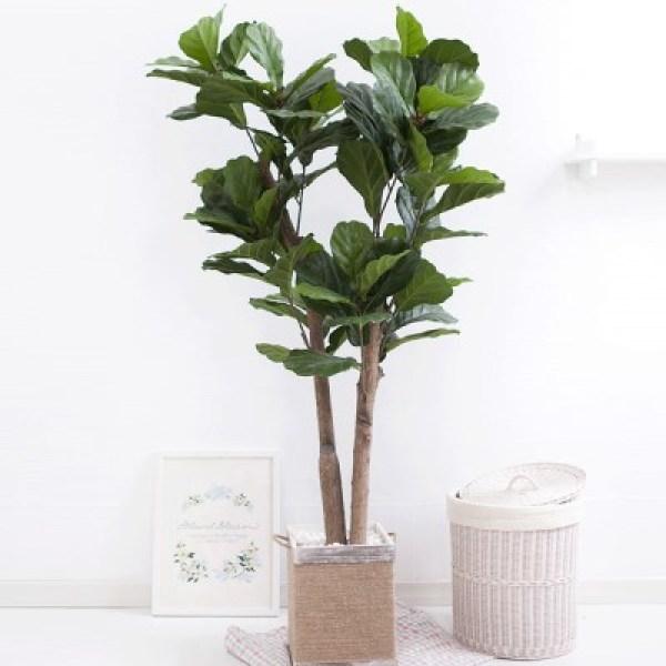 떡갈고무나무화분set 230cm K M 조화 인조 나무 인테리 (1689386) 상품이미지