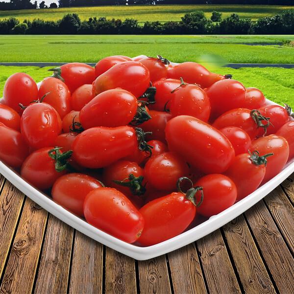 두레 대추 방울토마토 5kg(3/4번과) 상품이미지