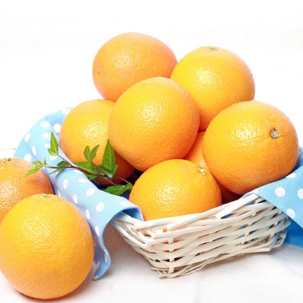 미국산 고당도네이블 오렌지20과 상품이미지
