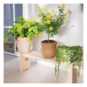 [플라팜] 히노끼 편백나무 화분정리대 대형 화분선반 받침대