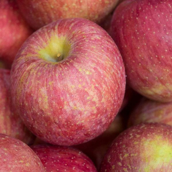 제철과일 햇 사과 가정용사과4kg소과24과내외 상품이미지