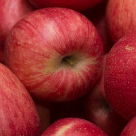 제철과일 햇 사과 가정용아오리사과4kg소과20과내외