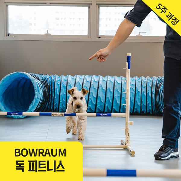 서울  바우라움 독피트니스 (반려견 운동프로그램) 상품이미지