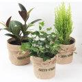 키우기쉬운 공기정화식물 꽃 미니화분 다육 식물 화분
