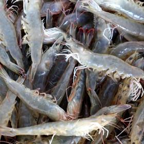 국내산 활새우 1kg 대 22-29미