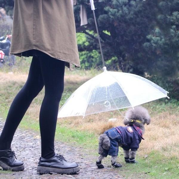 (갓샵( 강아지 애견 우산 상품이미지