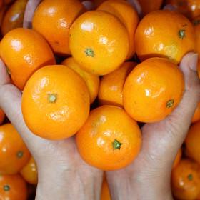 천하일품 제주감귤 10kg 소과로얄(2S-S/M)