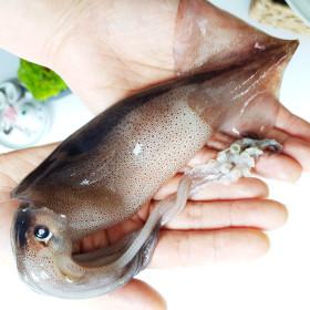 동해안 오징어 특대 1kg (2~4미/선동) 주문진항 직송