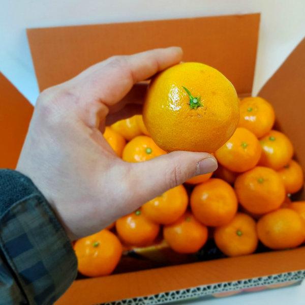 다담농산 노지감귤 10kg (2L대과) 소문 안난 맛집 감귤 상품이미지