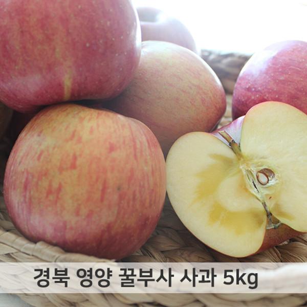 경북 영양 꿀부사 사과 가정용 5kg 12~14과 13과 내외 상품이미지