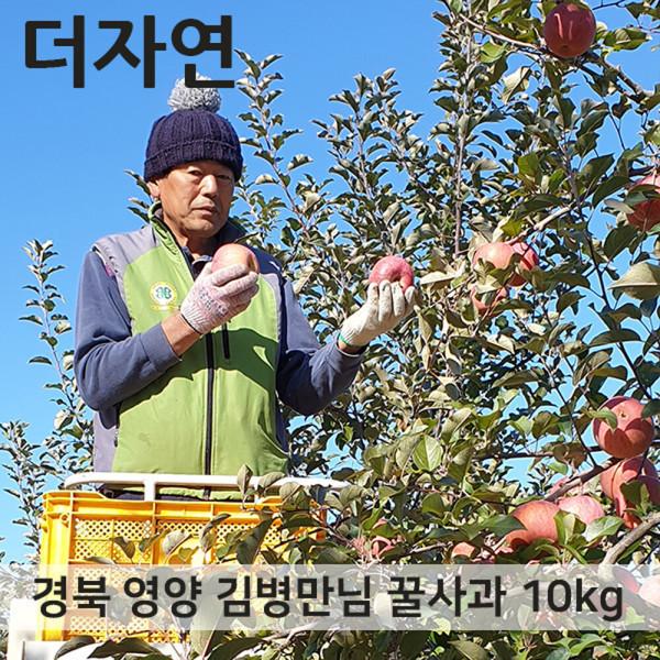 경북 영양 꿀부사 사과 가정용 5kg 10~11과 11과 내외 상품이미지
