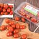 스테비아토마토 고당도 꿀토마토 샤인마토 500g+500g 상품이미지