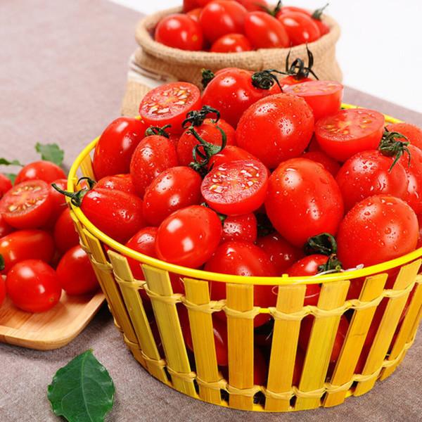 방울토마토 대추방울토마토 5kg (중소과/정품) 상품이미지