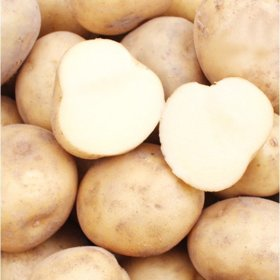 /Special price/2018 harvested fresh potatoes 20kg from 12900 won