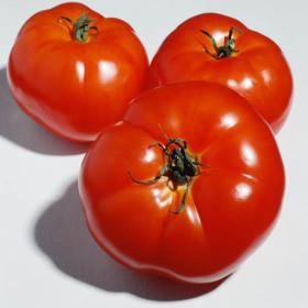 (단아프레쉬) 탱글탱글한 찰토마토 2.5kg (크기랜덤)