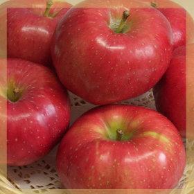 아삭아삭 맛있는 사과10kg(42과전후)중사이즈